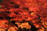 wakayama249_971109.jpg